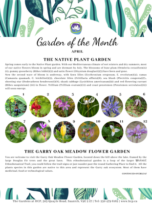 garden-of-the-month-1.pdf
