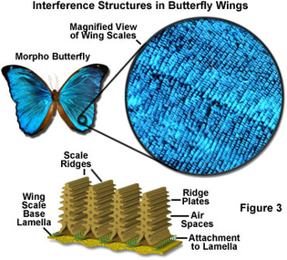 interference-structures-butterfly-wings.jpg