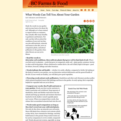 What Weeds Can Tell You About Your Garden - BC Farms & Food