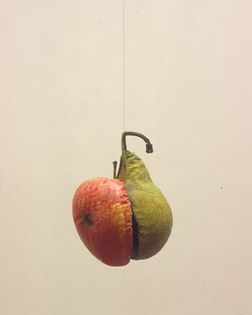 apple_pear_aug_05.jpg