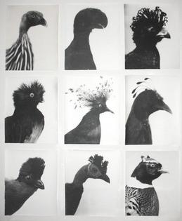 bird-typology.jpeg