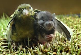 birdmousean2.jpg