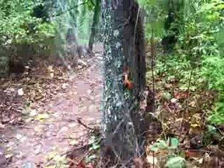 Spiderweb in the wind