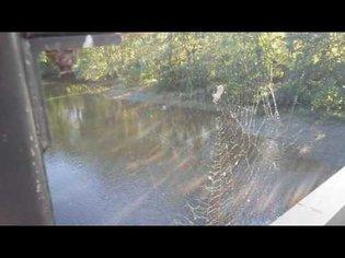 Spiderweb in wind 2