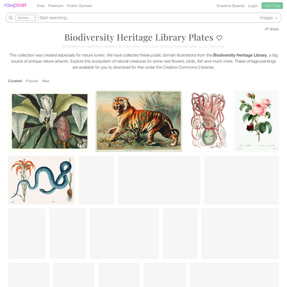 Biodiversity Heritage Library Plates   Biodiversity Heritage Library Plates Free Public Domain Natural Paintings   rawpixel