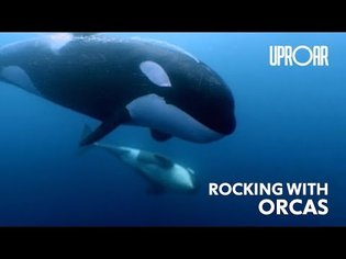 Orcas Sing Along to Guitar Tunes