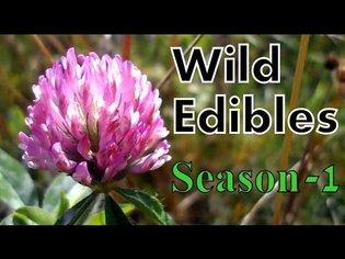 Wild Food Foraging- Season 1