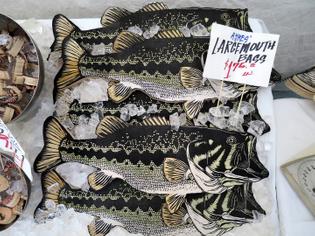 Nic Annette Miller, Fishstallation, 2014