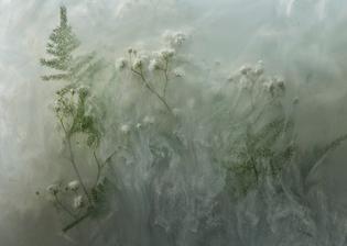plant-028.jpg