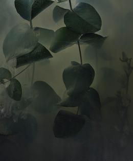 plant-026.jpg