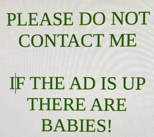 if the ad is up there are babies!