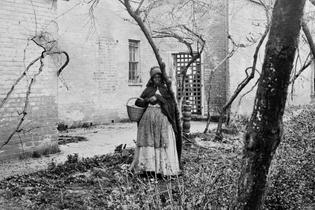 Black Herbalism History