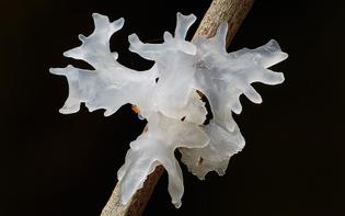 fungi-mushrooms-photography-steve-axford-5__880.jpg