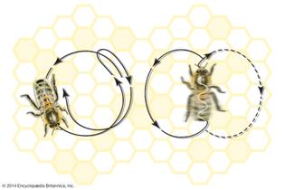 dance-movements-dance-honeybee.jpg