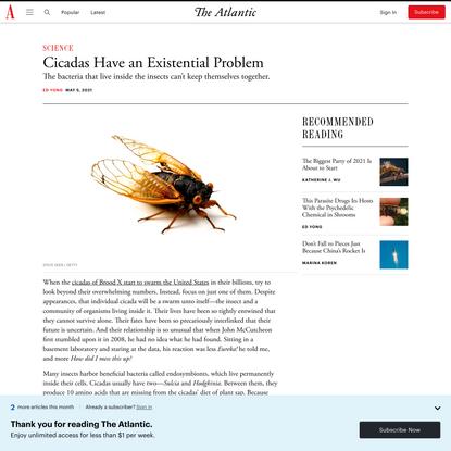 Cicadas Have an Existential Problem