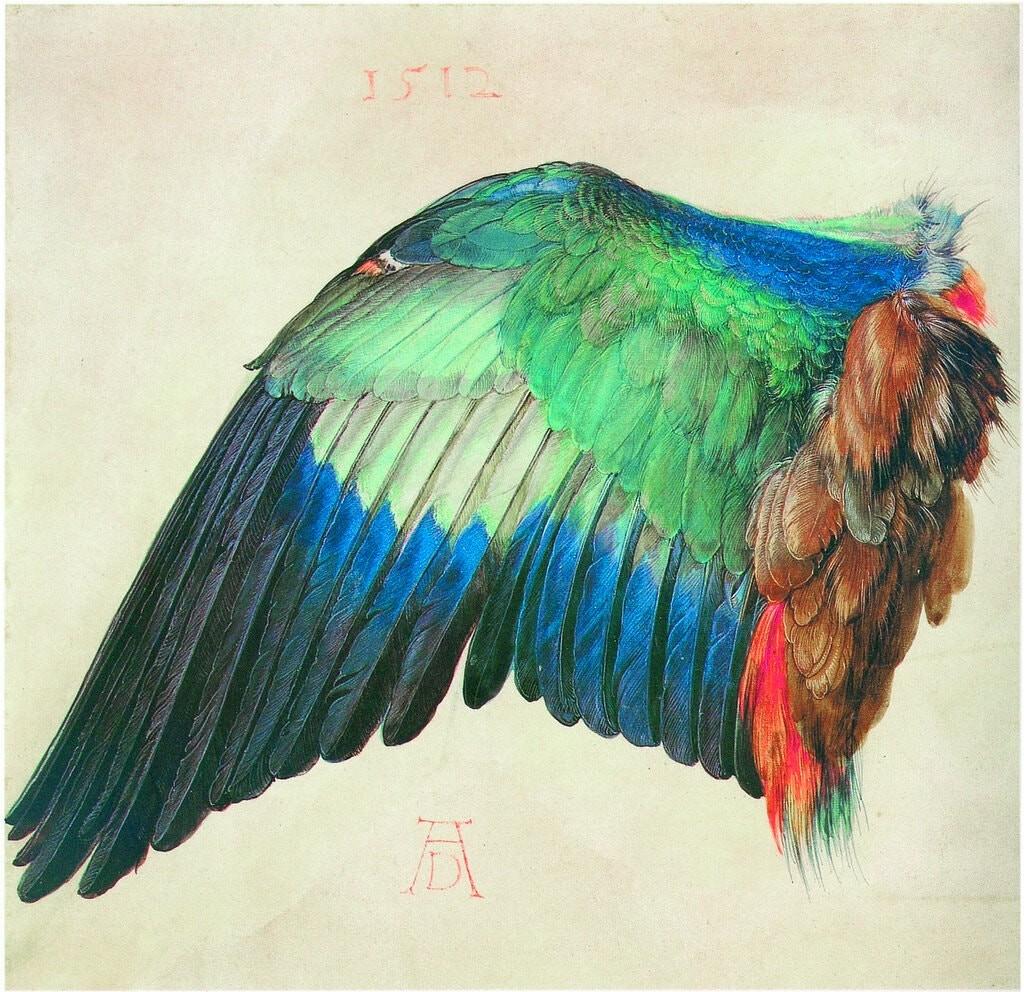 Albrecht Durer, Wing of a Blue Roller (circa 1500)