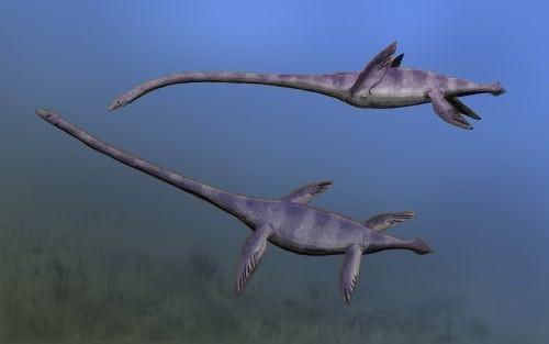 elasmosaurus_nt.jpg