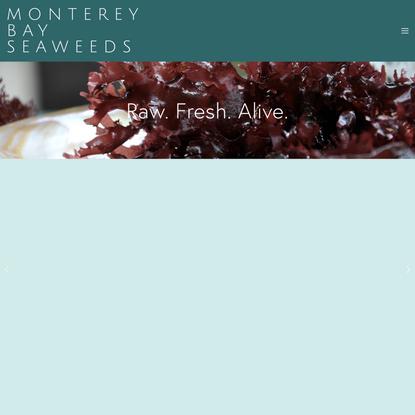 Monterey Bay Seaweeds