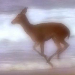 Neroli by Bambi