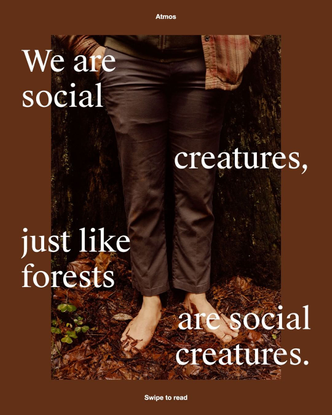 We are social creatures, just like forests are social creatures.