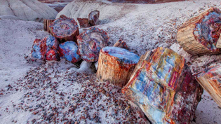 Petrified-wood-in-the-Petrified-Forest-National-Park-Arizona-20150329.jpg