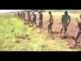 sukuma dance and their farming style