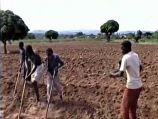 From the Field: Musical Labor Performed in Northwest Tanzania [Live in Northwest Tanzania 1995]