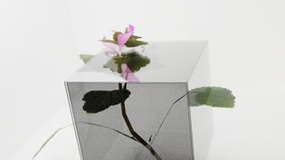 box_4.png