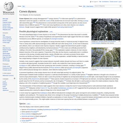 Crown shyness - Wikipedia