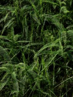 slocums_leaves_18_50-.jpg