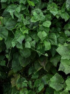 cucumbers_60-.jpg