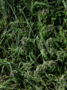purple_flowers_grass_60-.jpg