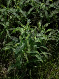 slocums_leaves_22_60-.jpg