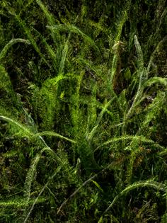 slocums_leaves_20_60-.jpg