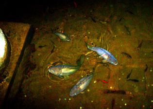 1280px-carp_at_the_basilica_cistern-_istanbul_2007.jpg