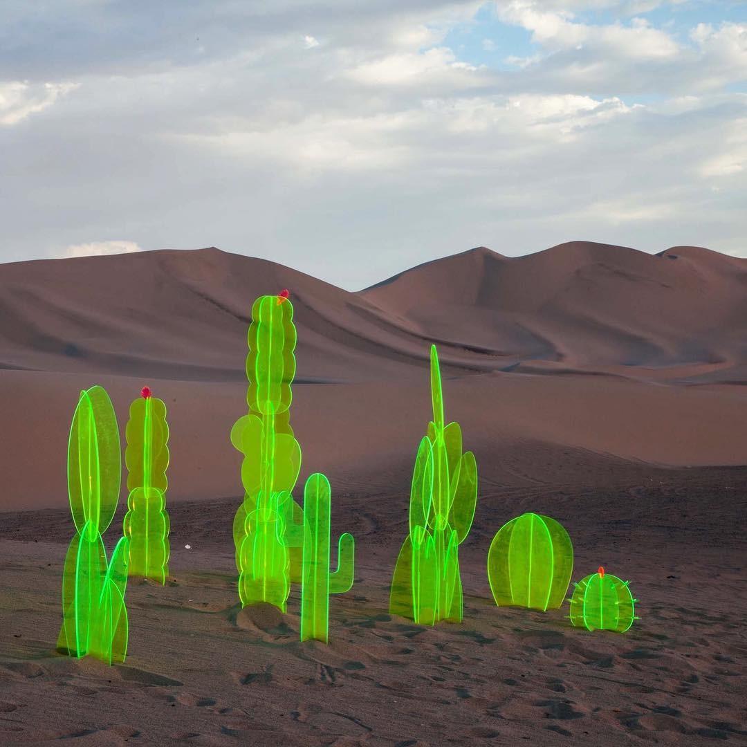 Nobel Truong - Cacti in Death Valley