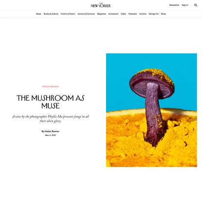 The Mushroom as Muse