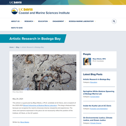 Artistic Research in Bodega Bay   Coastal and Marine Sciences Institute