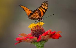 pollination-definition-800x500.jpg