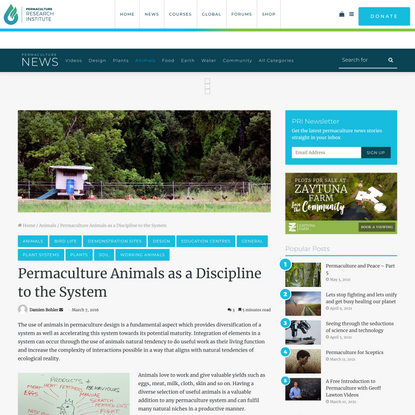 Permaculture Animals as a Discipline to the System - The Permaculture Research Institute