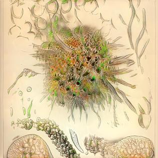 Ernst Haeckel StyleGAN