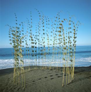 Nils Udo, Circle of Calumet, Bamboo, 1990 Reunion, Indian Ocean