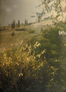 Anny Wild-Siber - Ginster, 1920–40er Jahre