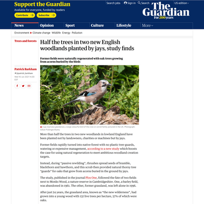 Half the trees in two new English woodlands planted by jays, study finds | Trees and forests | The Guardian
