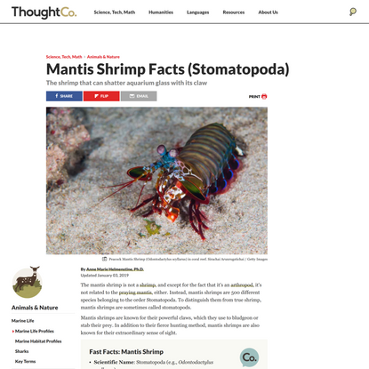 Meet the Powerful Shrimp That Can Shatter Aquarium Glass With Its Claw