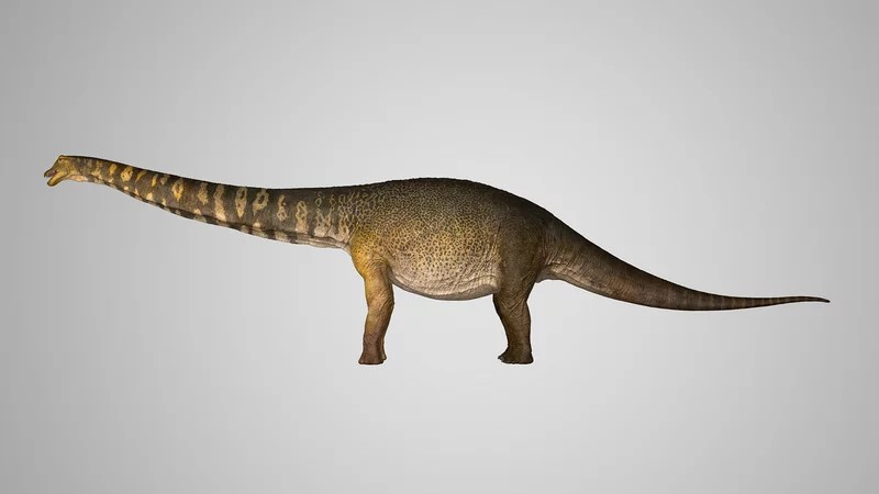 australotitan_cooperensis_konstantinov_-c-_eromanga-natural-history-museum_1_wide-f59148198896e571e2ac0cad5ed64900a3036387-s...