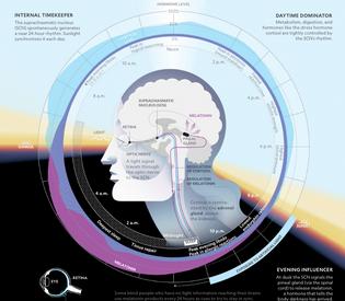 circadian-rhythm-national-geographic.png
