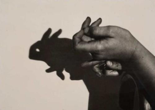 rabbit shadow