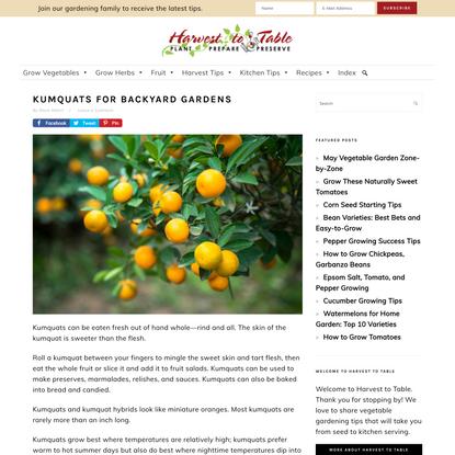Kumquats for Backyard Gardens - Harvest to Table