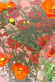 pink_poppies_highres_2.png